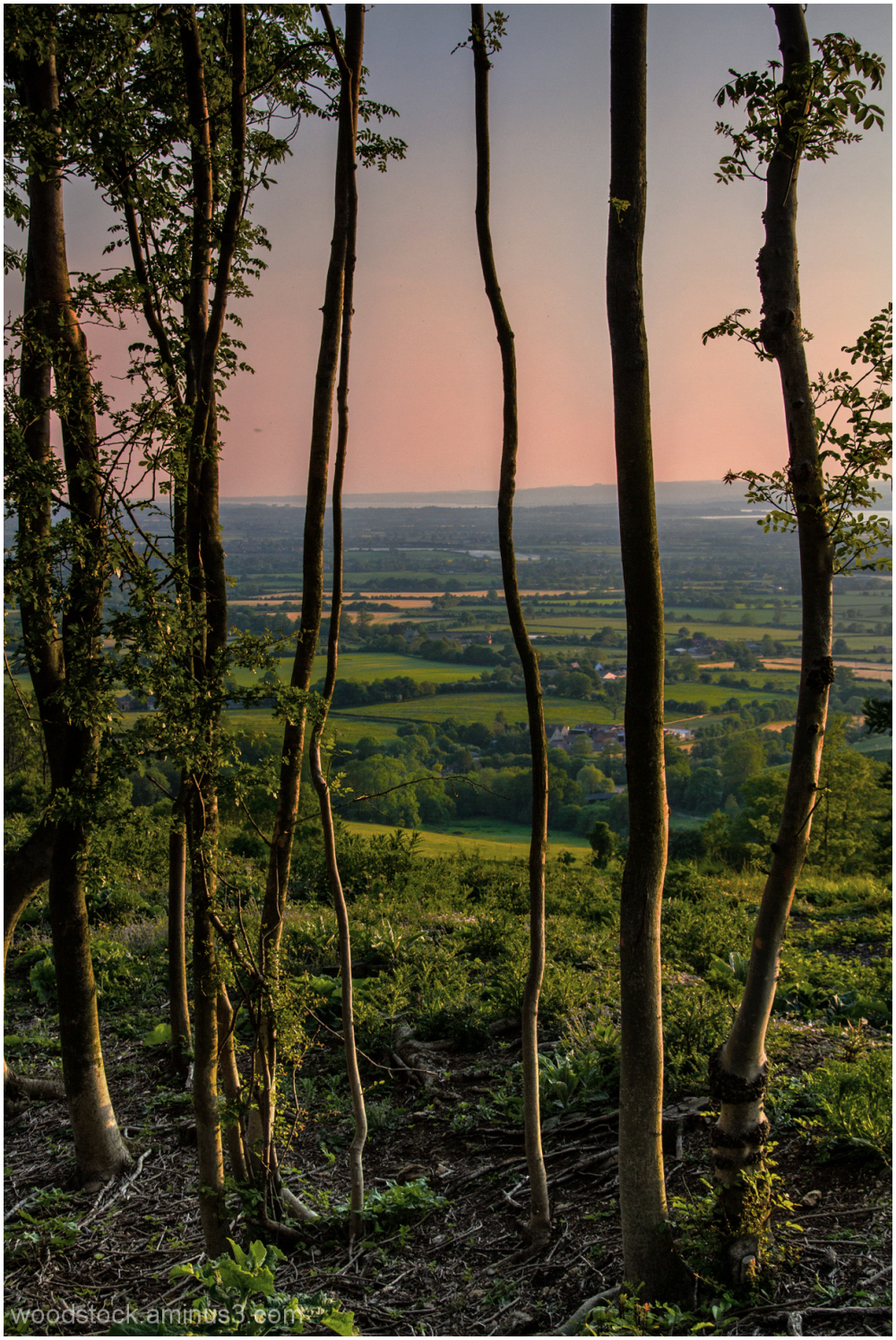 Standish Woods Towards The River Severn