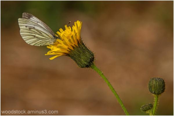 September Butterfly