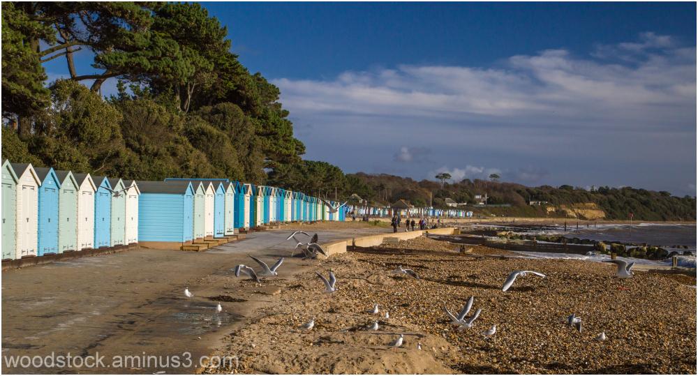 Beach Huts and Gulls