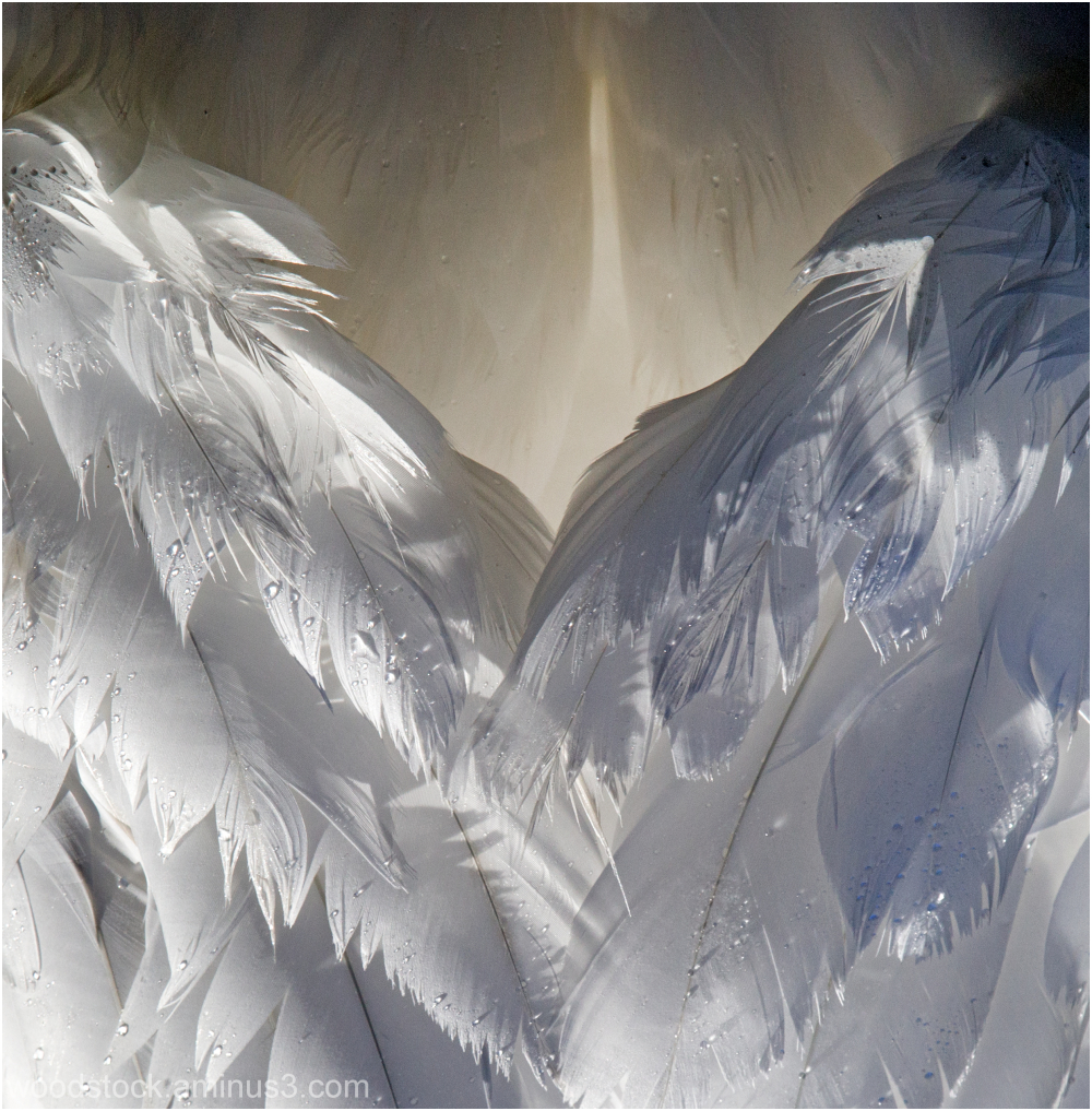 The Wings Of An Angel