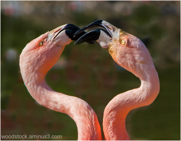 Flamingo Wars