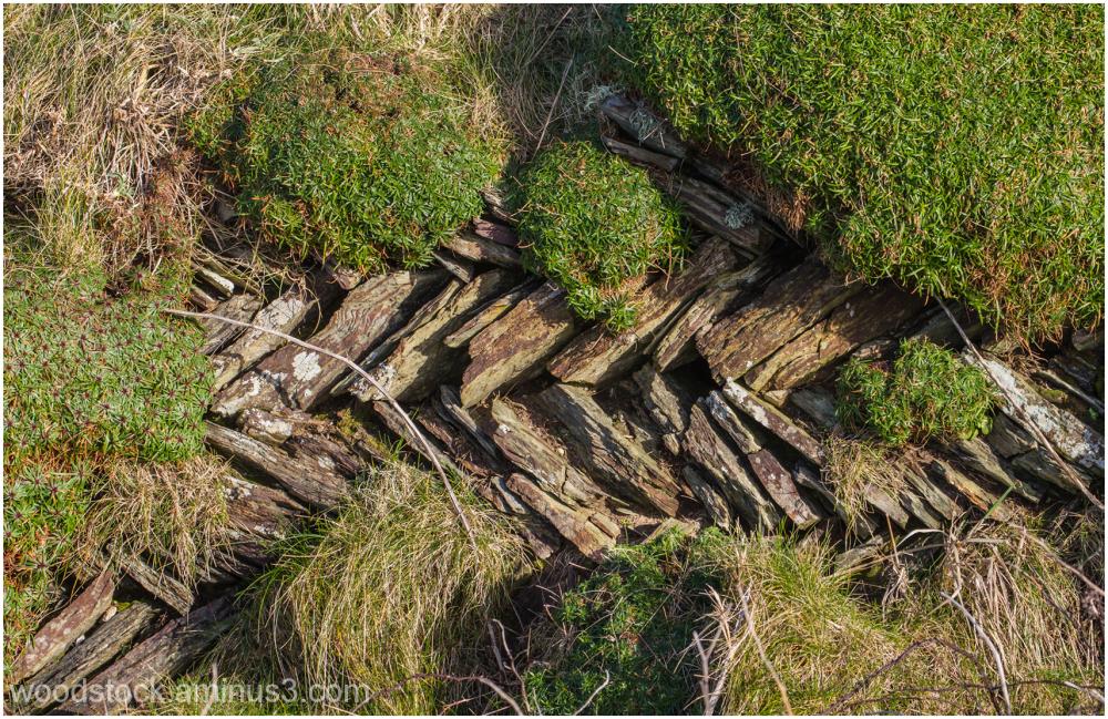 A Cornish Wall