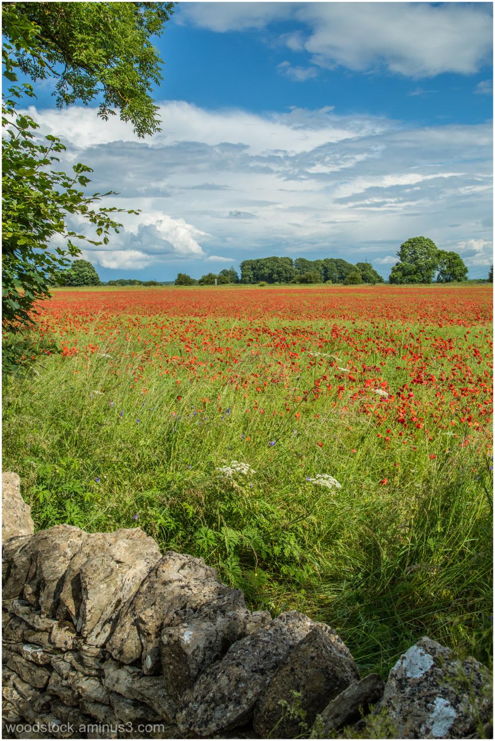 Near Fossebridge, Gloucestershire