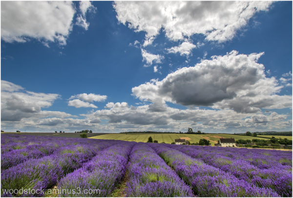 Cotswold Lavender, Broadway