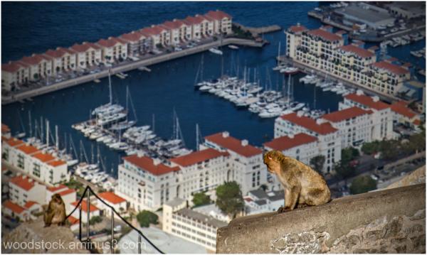 Gibraltar - Apes