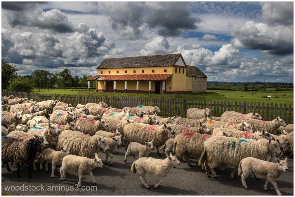 Wroxeter Roman City - Shropshire