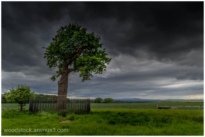 The Boscobel Oak