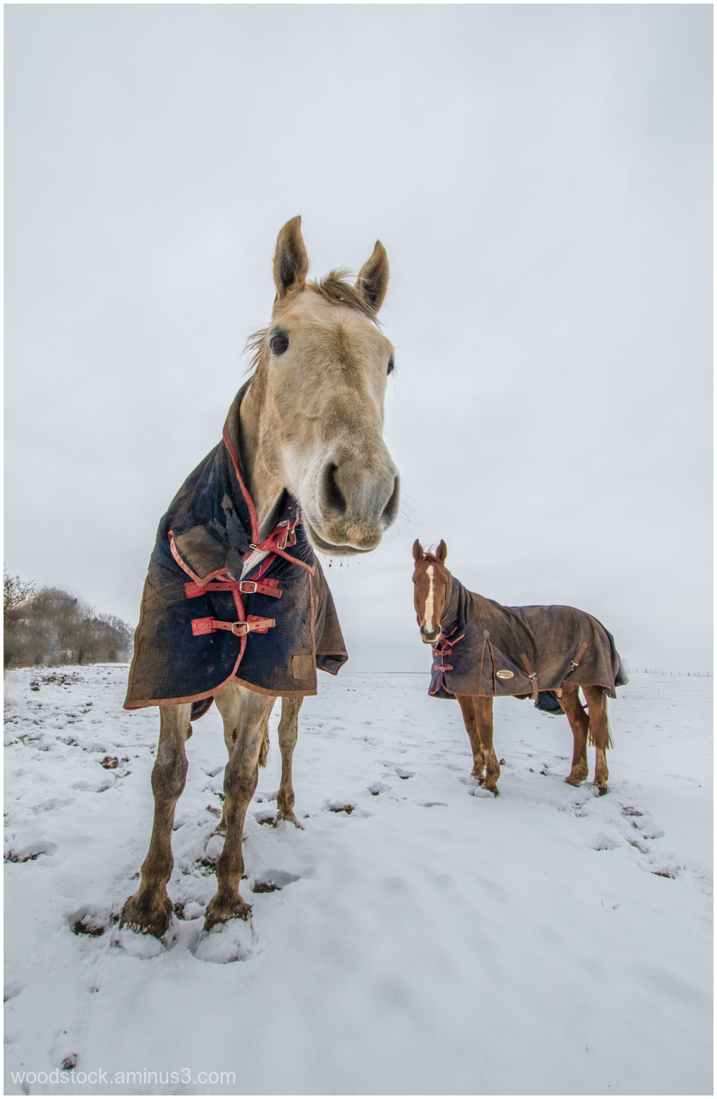 Who'd Be A Horse In This Weather?