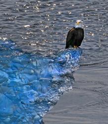 Eagle On The Rocks