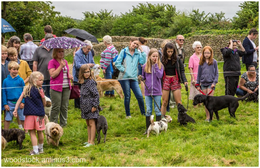 Village Dog show