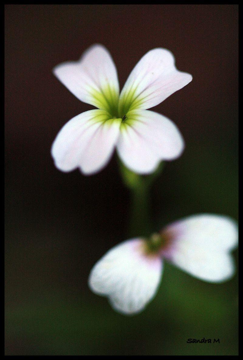 Flower power #6