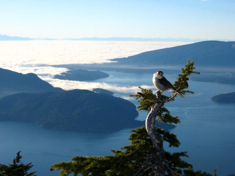 cypress mountain bird