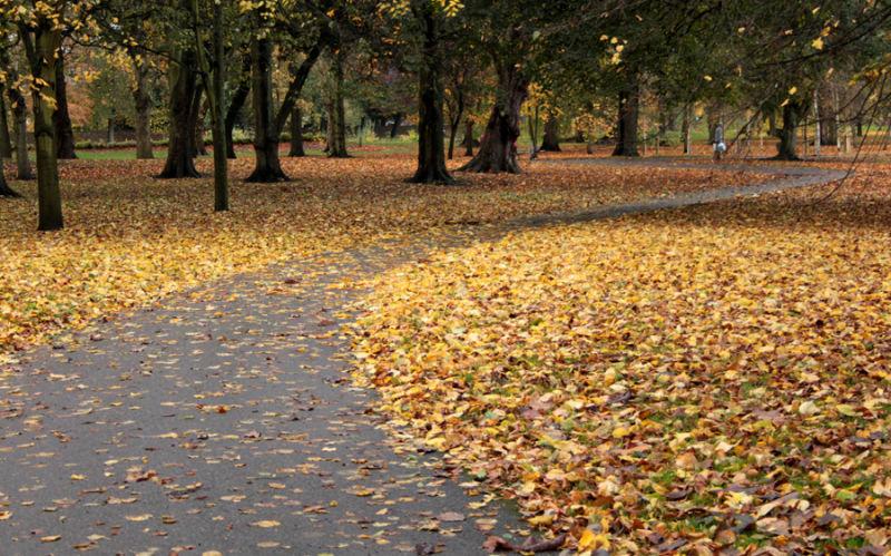 cardiff bute park autumn leaves