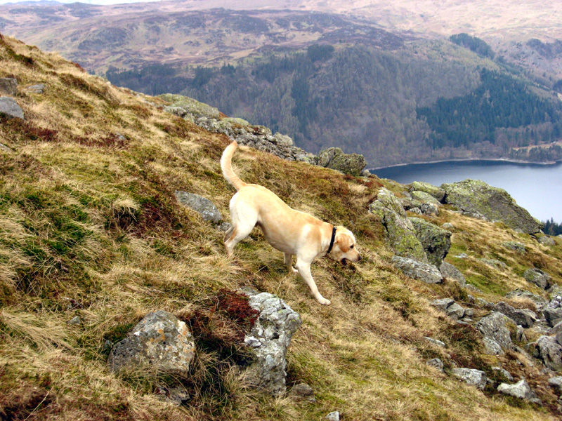 dog fetching ball on mountain