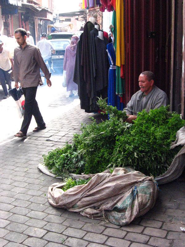 moroccan mint marrakech street