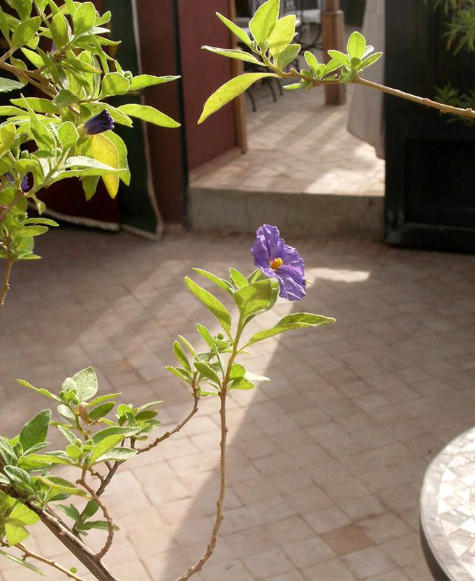 marrakech roof terrace purple flower