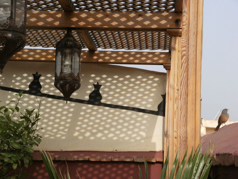 marrakech roof terrace finch
