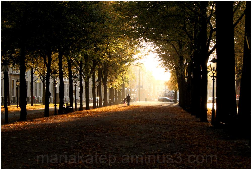 autumn netherlands hague leaves