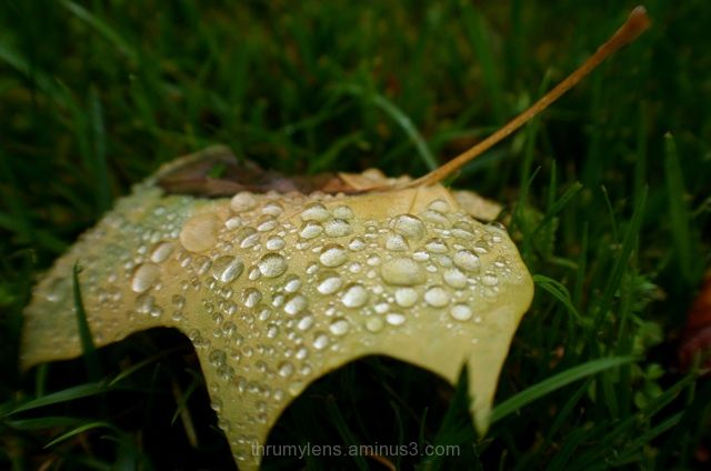Dew covering a leaf