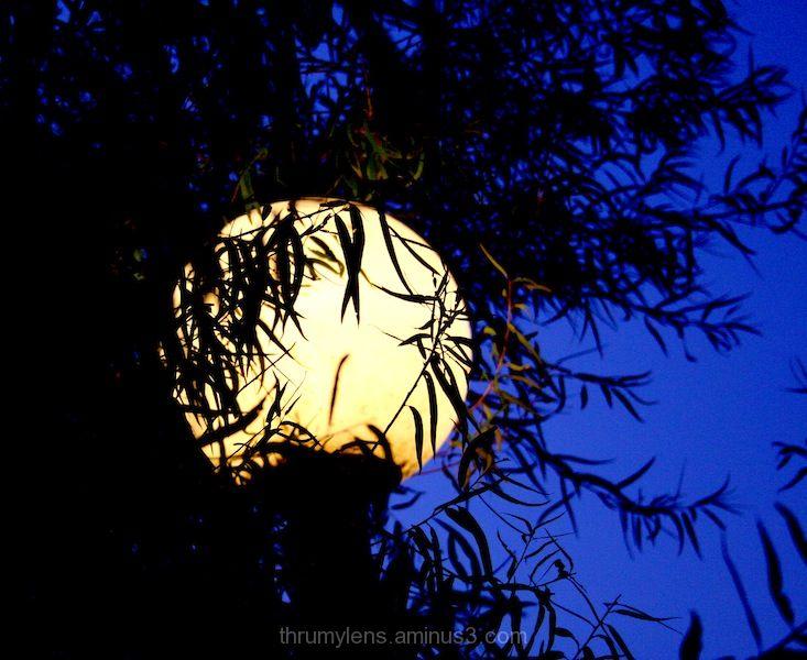 Lamp post at twilight