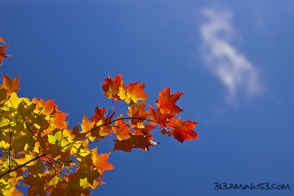 Autumn Leaves IV (Homage to the EX)