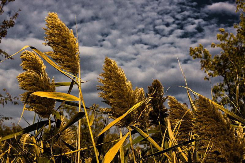 The Tall Grass