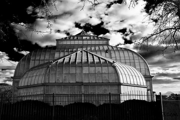 Anna Scripps Conservatory II