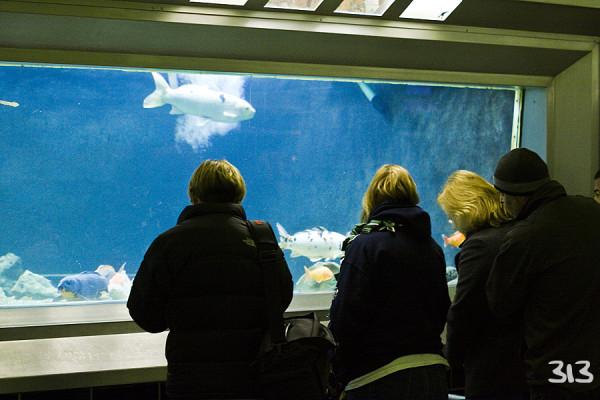 Belle Ilse Aquarium II