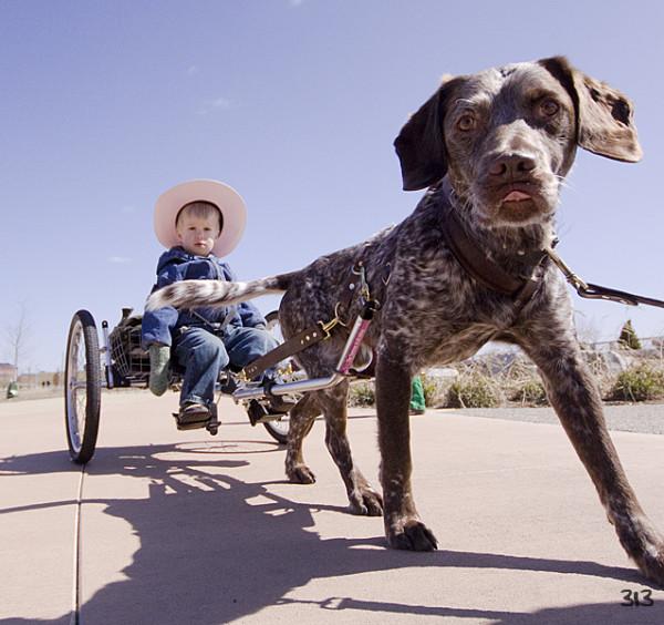Dog & Buggy