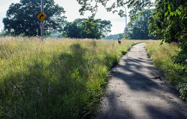 Meadows of Detroit