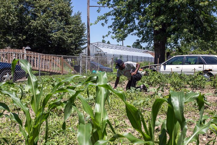 Farms of Detroit