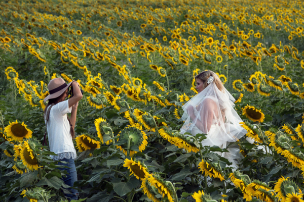 Sunflower Session