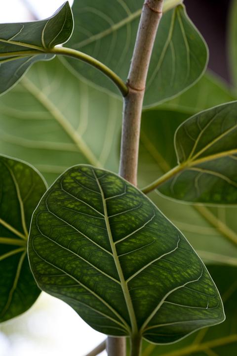 The Secret Lives of Plants