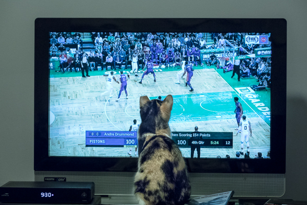 Basketball Fan