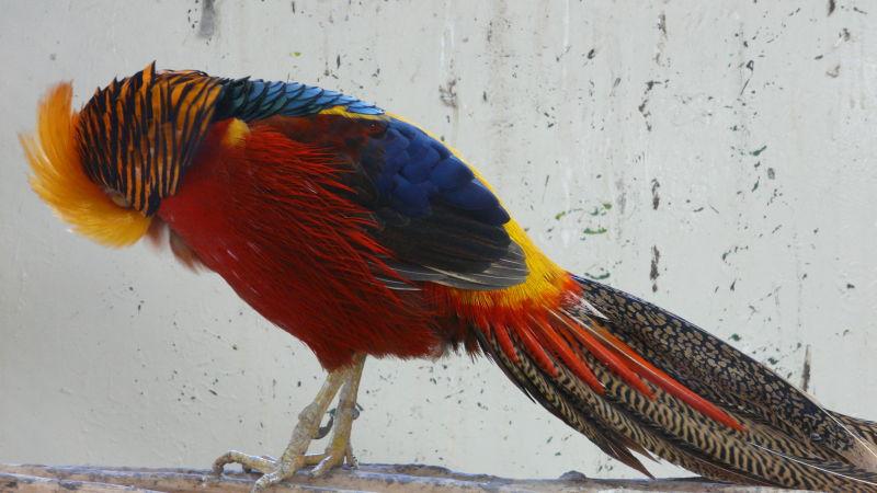 Oiseau des îles