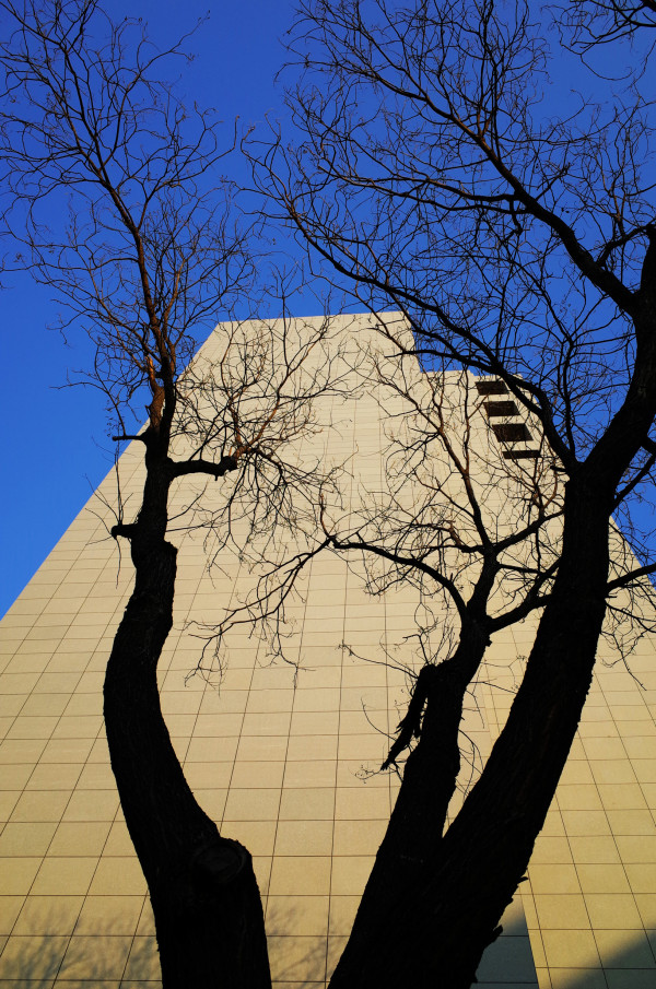 Tree, Building and Sky @ Beijing, China