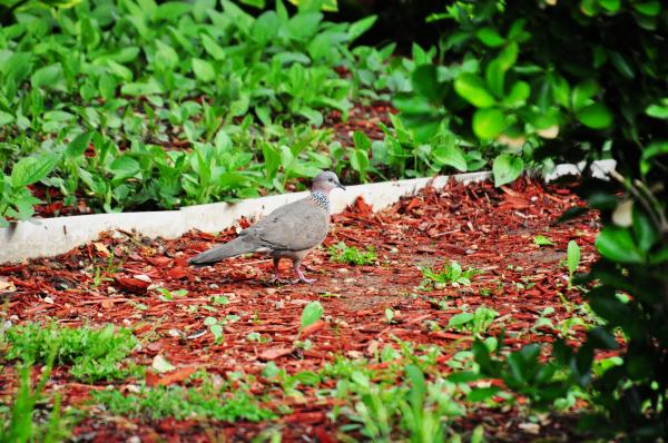 Pigeon in Wanshou Park