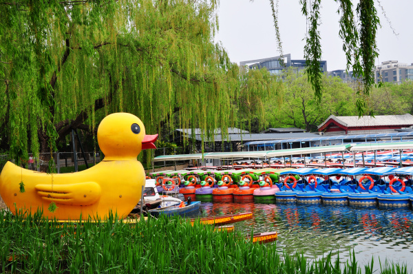 Big Yellow Duck and Boats