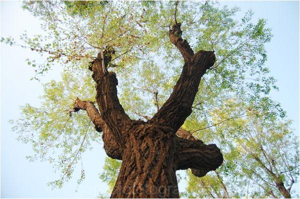 Tree of Reus.