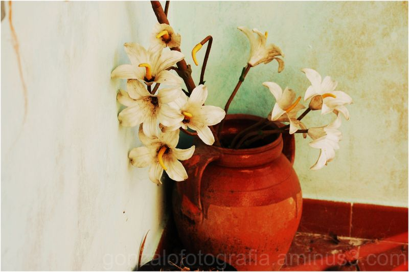 Flowers of plastic in ancient vase.