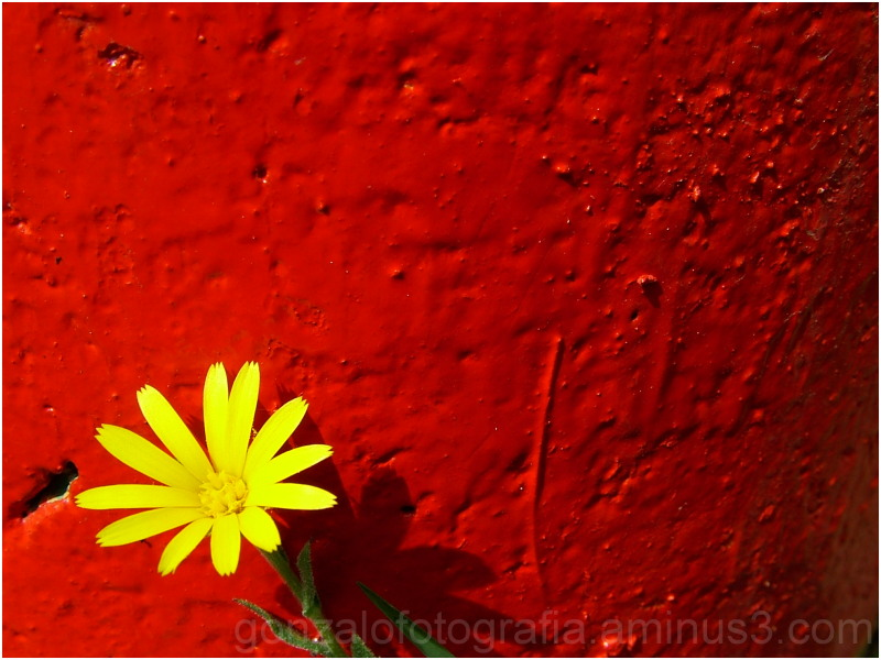 Yellow flower on red bottom.