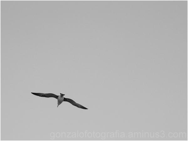 Corner and gull.