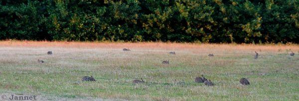 rabbitfamily