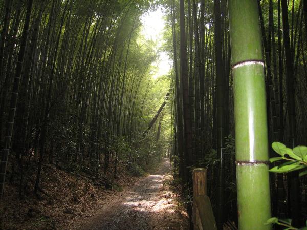 Kyoto - Japan / jungle