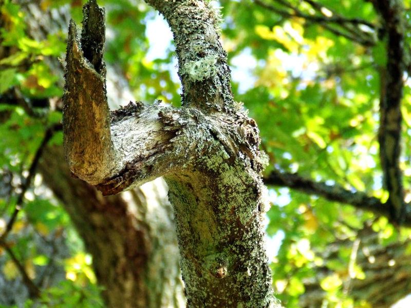 En fin bild på en trädgren