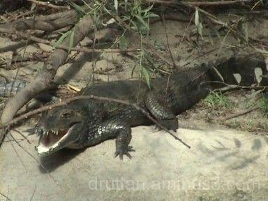 Krokodil i Parken Zoo i Eskilstuna