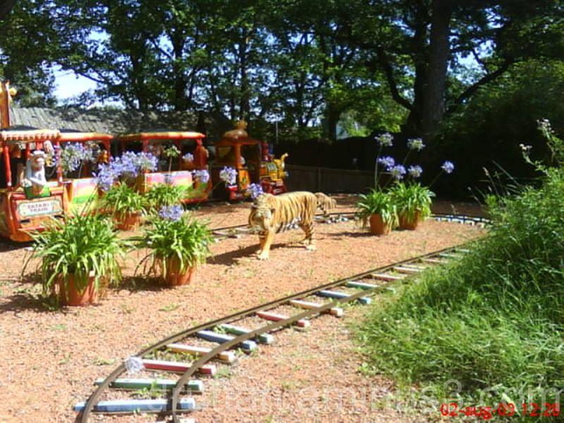 Ett tåg i Parken Zoo i Eskilstuna