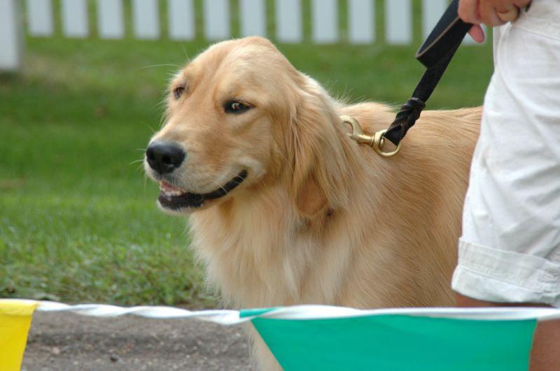 SLY DOG