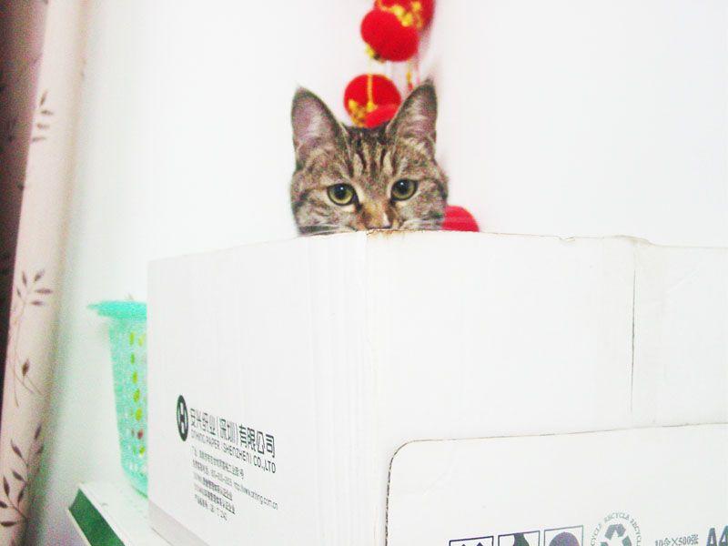 椰子之纸箱控