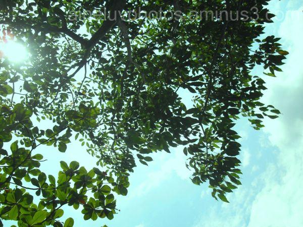 Sunlight & Tree